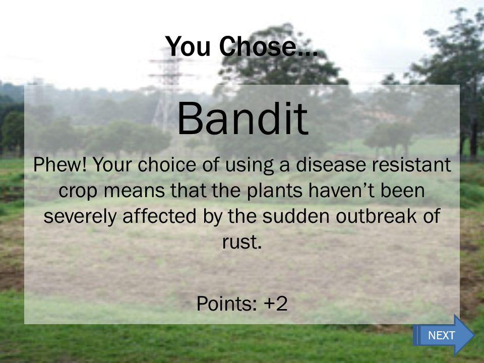 You Chose… Bandit Phew.