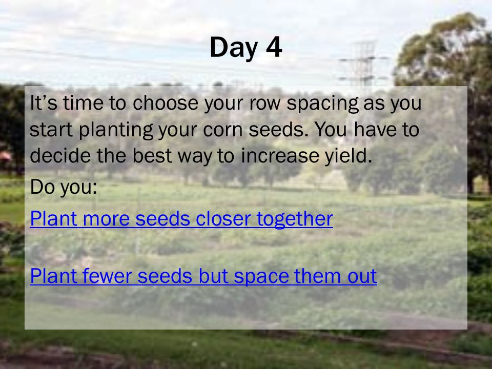 Day 4 It's time to choose your row spacing as you start planting your corn seeds.