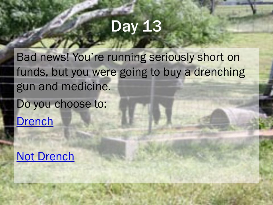 Day 13 Bad news! You're running seriously short on funds, but you were going to buy a drenching gun and medicine. Do you choose to: Drench Not Drench