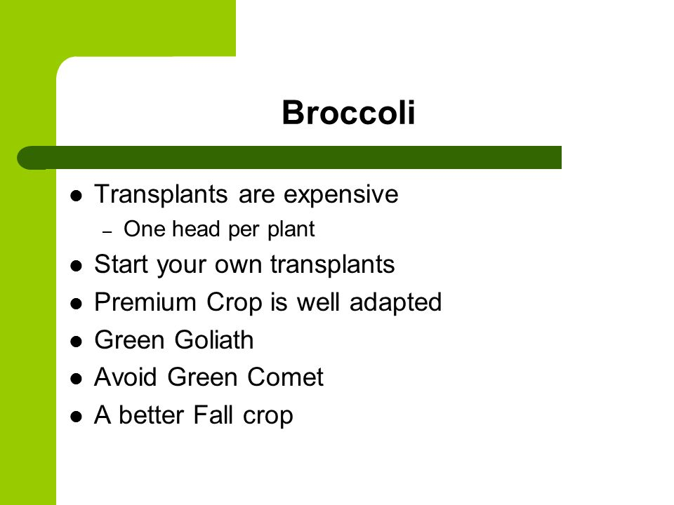 Broccoli Transplants are expensive – One head per plant Start your own transplants Premium Crop is well adapted Green Goliath Avoid Green Comet A better Fall crop