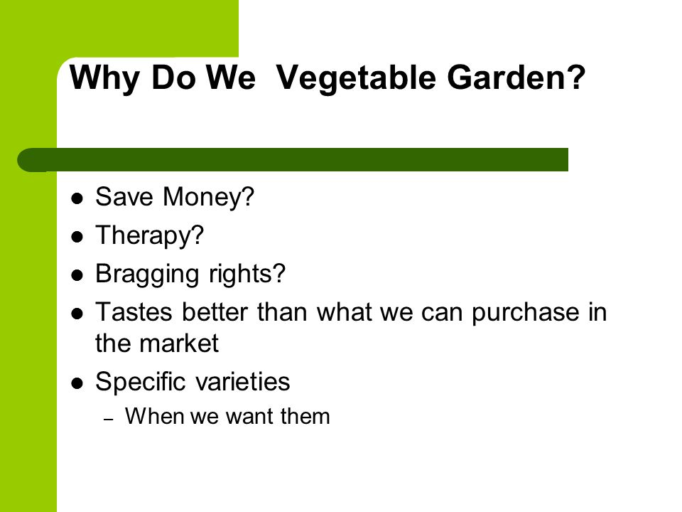 Why Do We Vegetable Garden. Save Money. Therapy.
