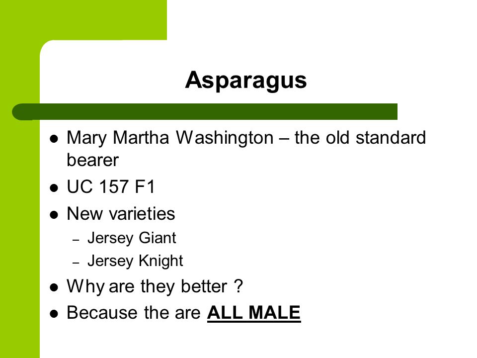 Asparagus Mary Martha Washington – the old standard bearer UC 157 F1 New varieties – Jersey Giant – Jersey Knight Why are they better .
