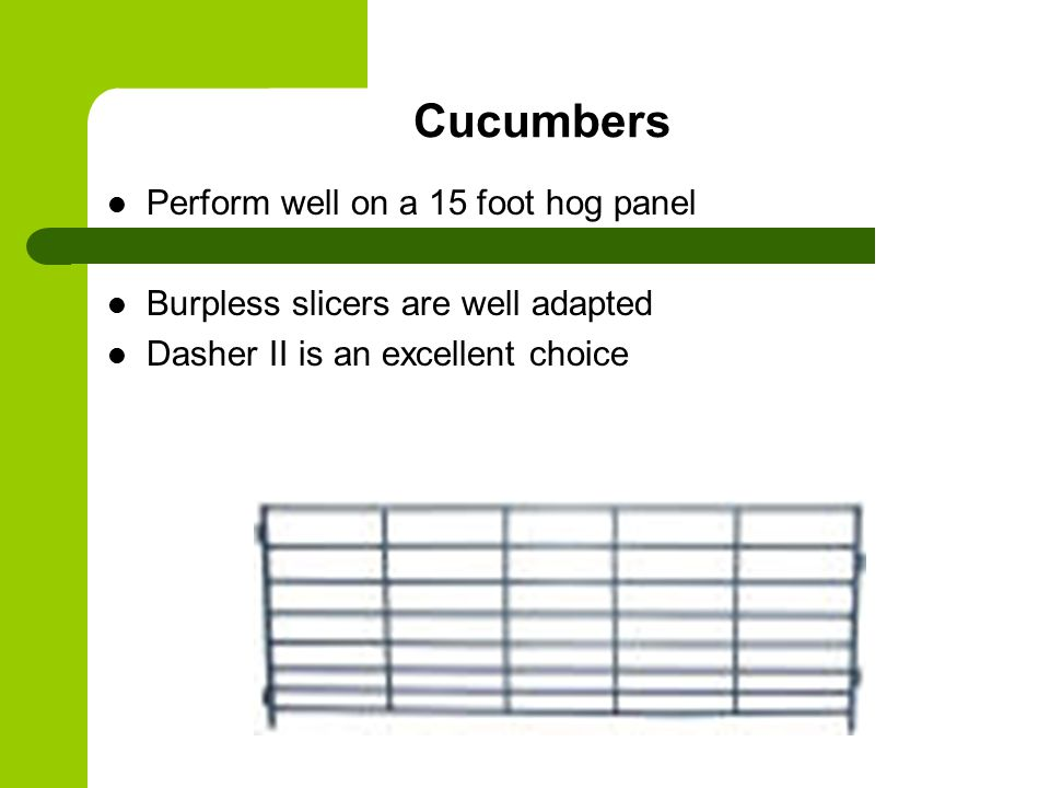 Cucumbers Perform well on a 15 foot hog panel Burpless slicers are well adapted Dasher II is an excellent choice
