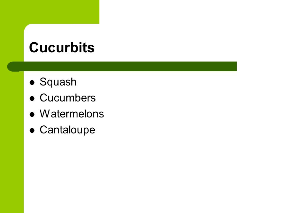 Diseases Mosaic Virus Spread by aphids, squash bugs and cucumber beetle Affects most all cucurbits Symptoms appear on 2 nd to 4 th true leaf but no on older leaves No control – a virus