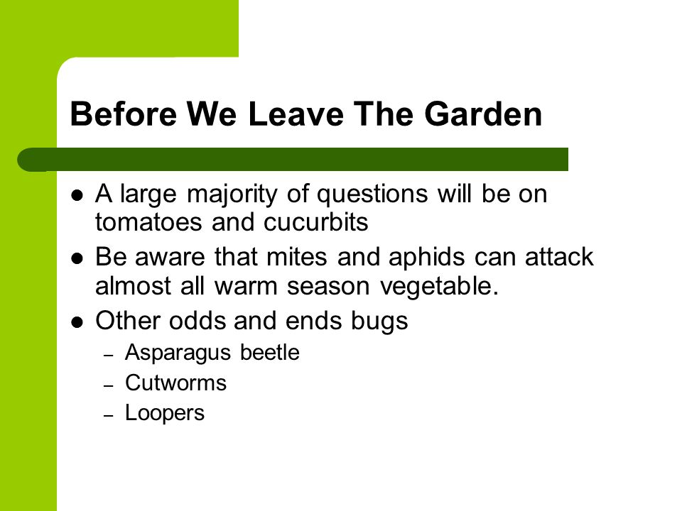 Before We Leave The Garden A large majority of questions will be on tomatoes and cucurbits Be aware that mites and aphids can attack almost all warm season vegetable.
