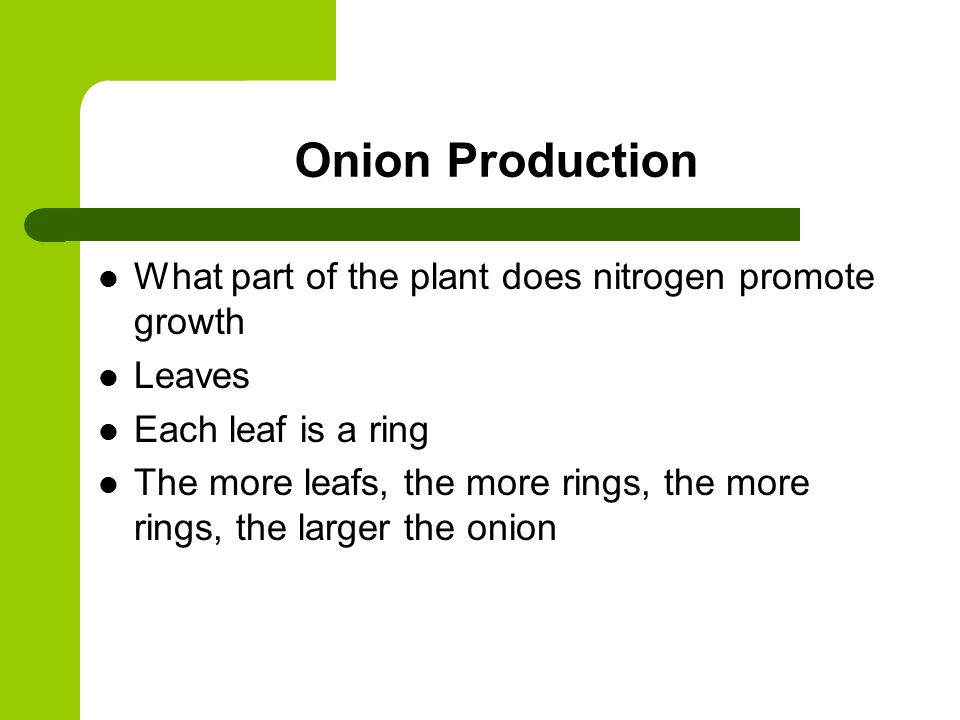 Onion Production What part of the plant does nitrogen promote growth Leaves Each leaf is a ring The more leafs, the more rings, the more rings, the larger the onion