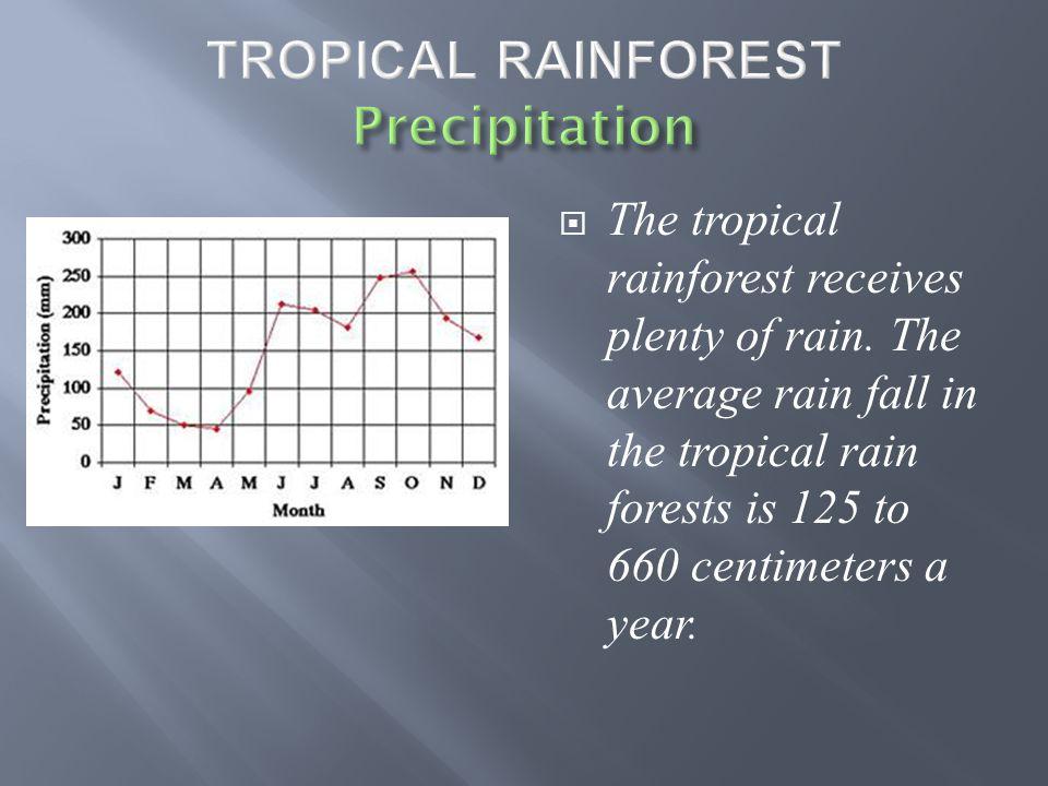  The tropical rainforest receives plenty of rain.
