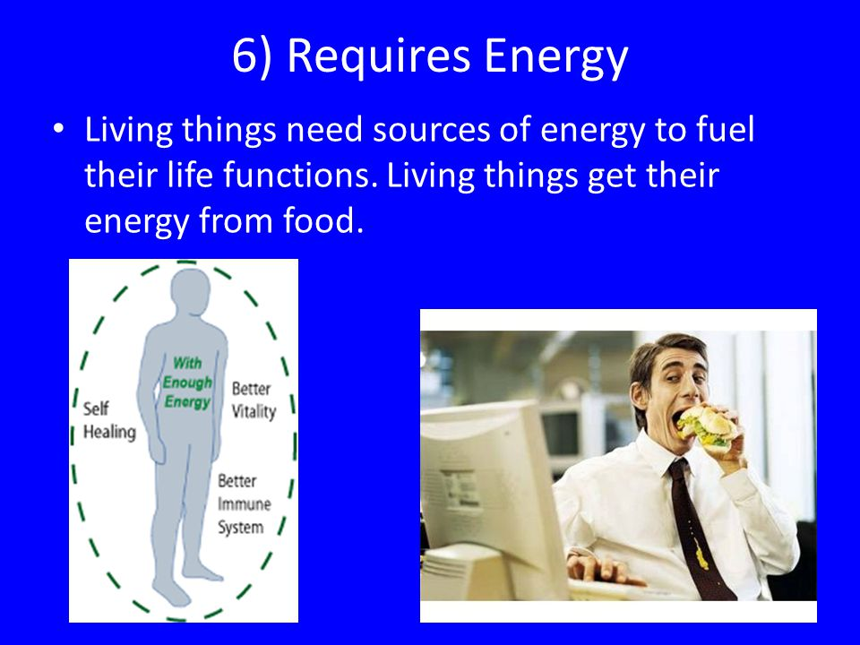 6) Requires Energy Living things need sources of energy to fuel their life functions. Living things get their energy from food.