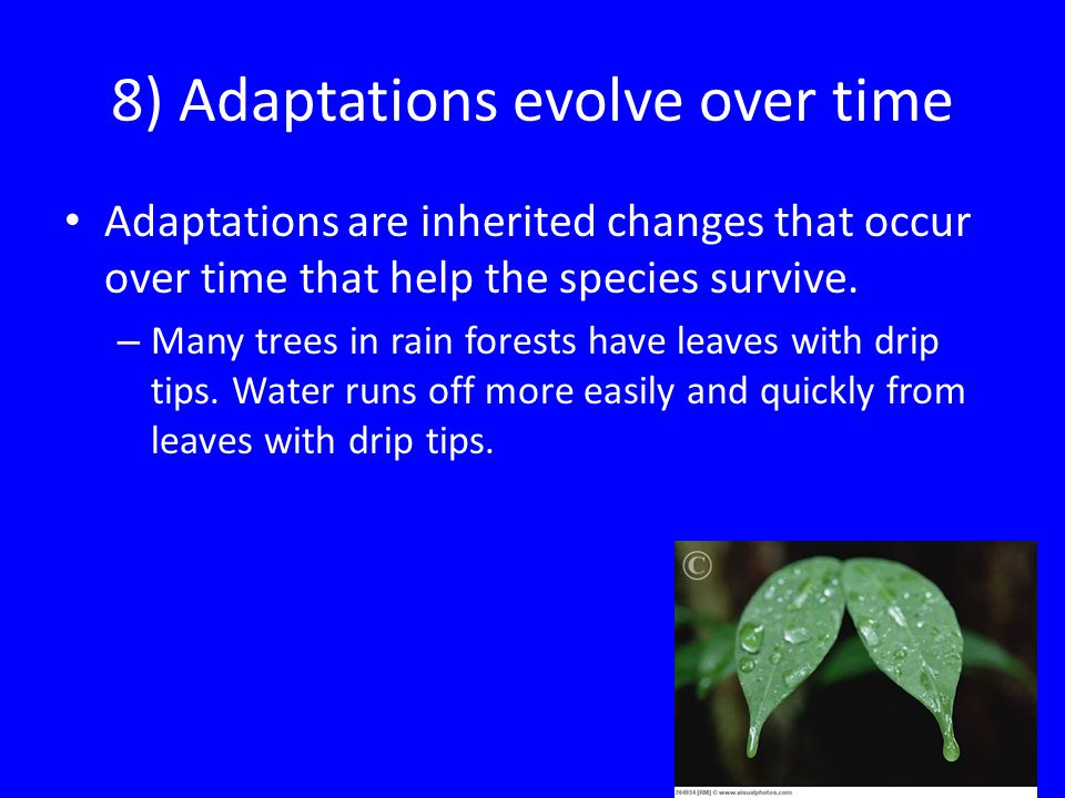 8) Adaptations evolve over time Adaptations are inherited changes that occur over time that help the species survive. – Many trees in rain forests hav