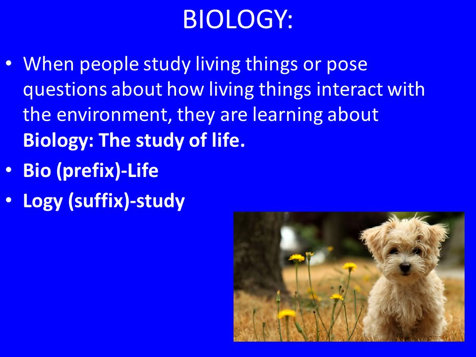 What do biologists do.Study the diversity of life: The behavior of all living organisms.