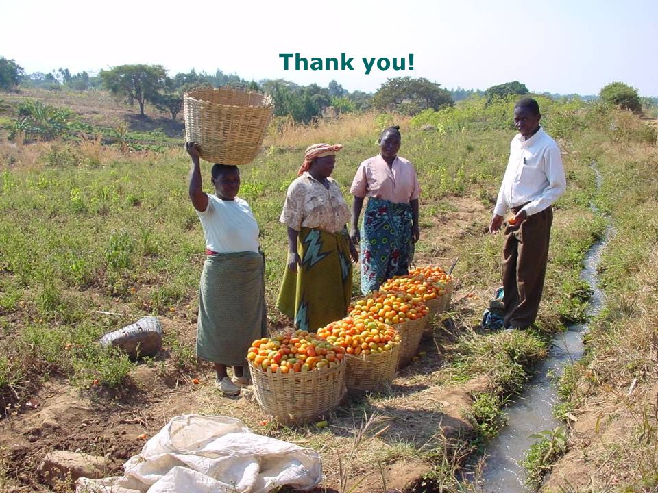 Picture – women farmers selling tomatoes near an irrigation canal Thank you!