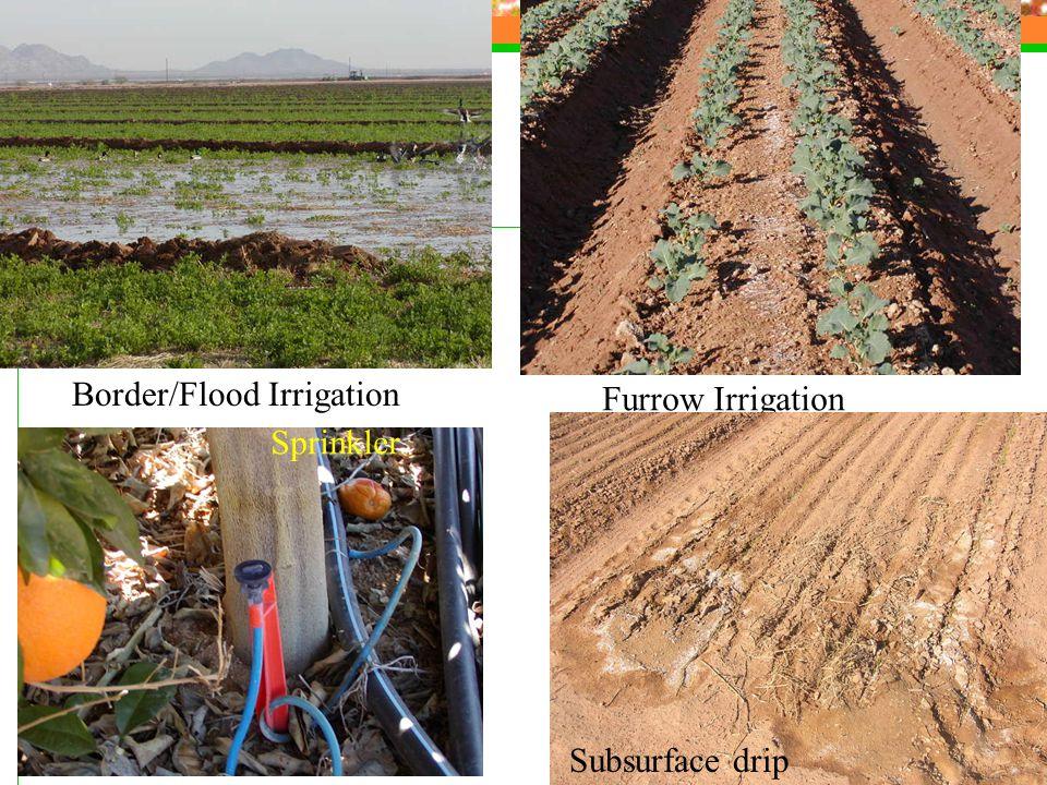 Border/Flood Irrigation Furrow Irrigation Sprinkler Subsurface drip