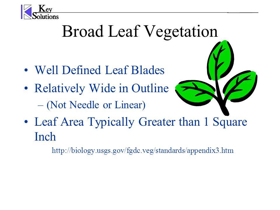 Broad Leaf Vegetation Well Defined Leaf Blades Relatively Wide in Outline –(Not Needle or Linear) Leaf Area Typically Greater than 1 Square Inch http://biology.usgs.gov/fgdc.veg/standards/appendix3.htm