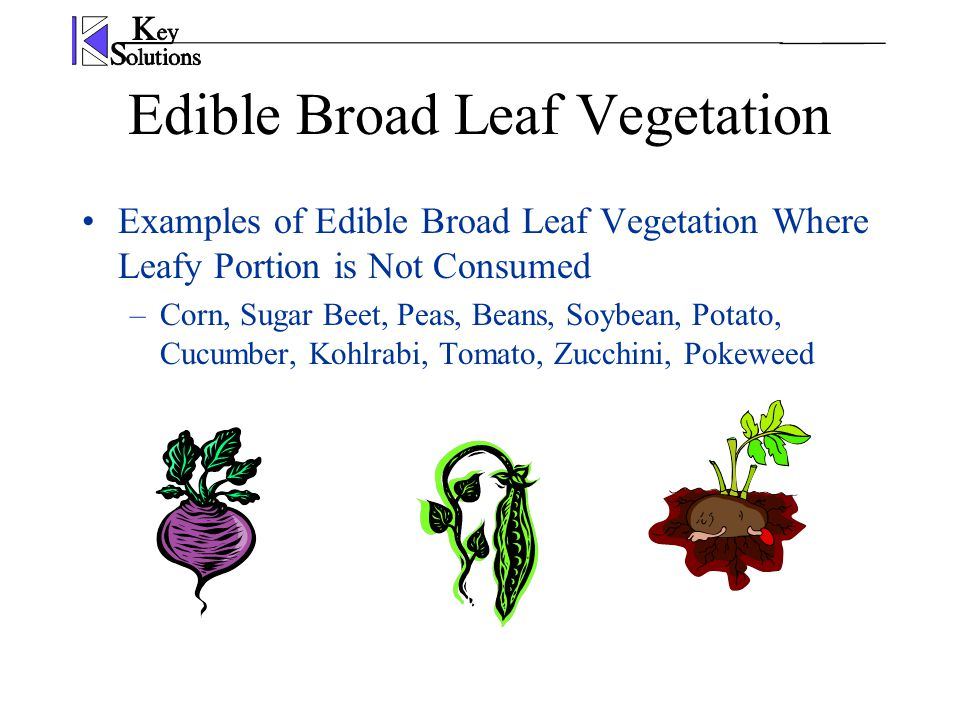 Edible Broad Leaf Vegetation Examples of Edible Broad Leaf Vegetation Where Leafy Portion is Not Consumed –Corn, Sugar Beet, Peas, Beans, Soybean, Potato, Cucumber, Kohlrabi, Tomato, Zucchini, Pokeweed
