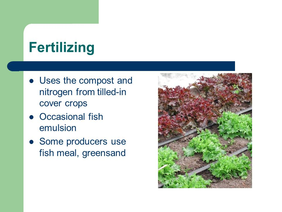 Fertilizing Uses the compost and nitrogen from tilled-in cover crops Occasional fish emulsion Some producers use fish meal, greensand