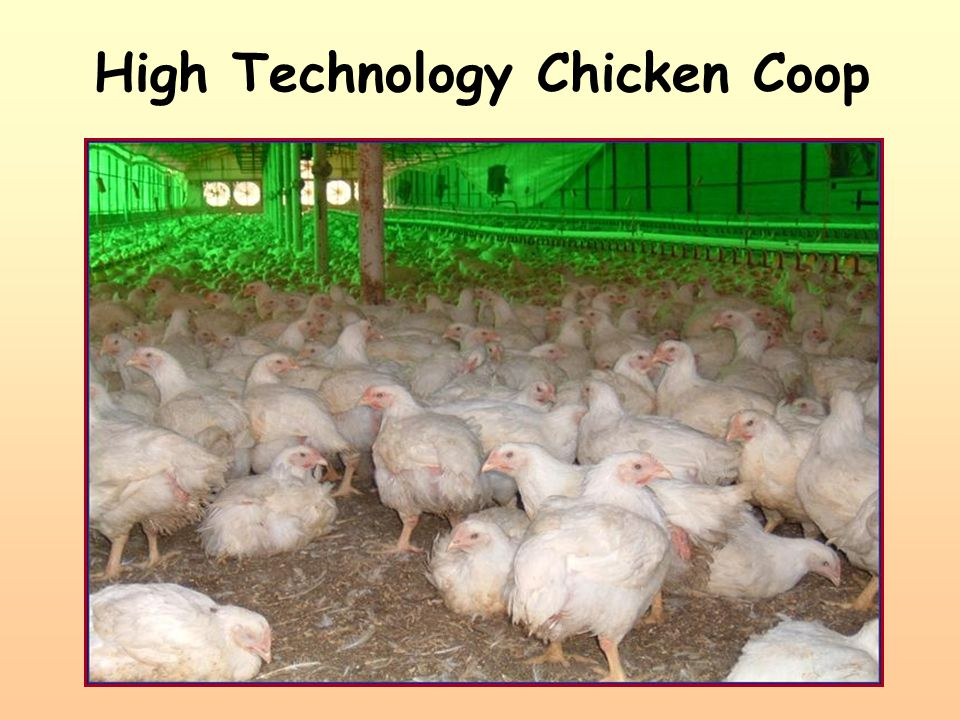 High Technology Chicken Coop