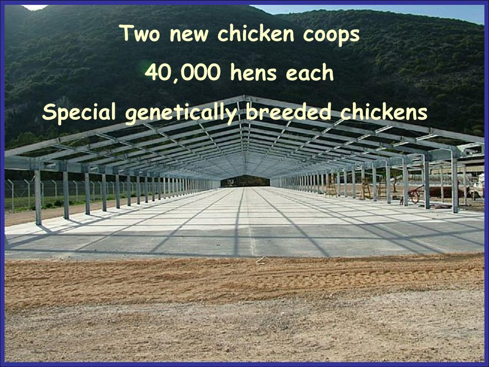 Two new chicken coops 40,000 hens each Special genetically breeded chickens