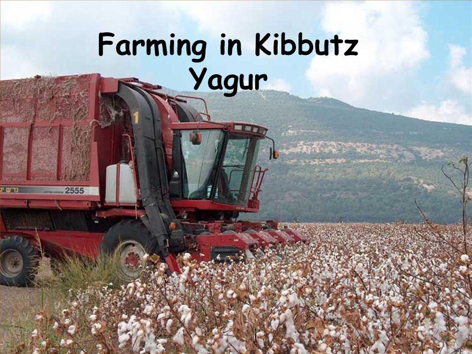 Farming in Kibbutz Yagur