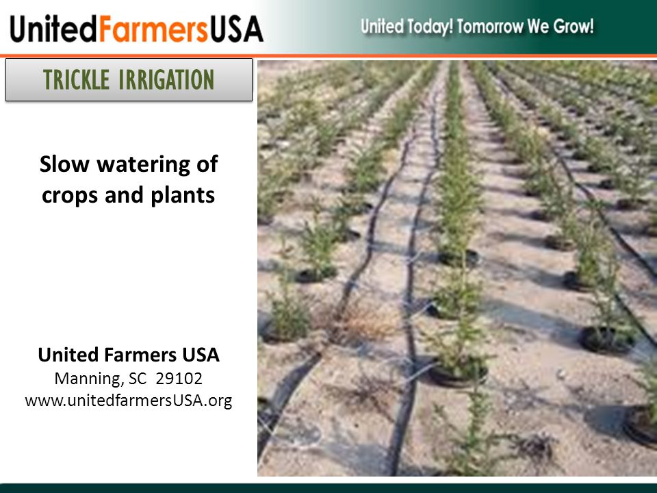 Slow watering of crops and plants United Farmers USA Manning, SC 29102 www.unitedfarmersUSA.org TRICKLE IRRIGATION
