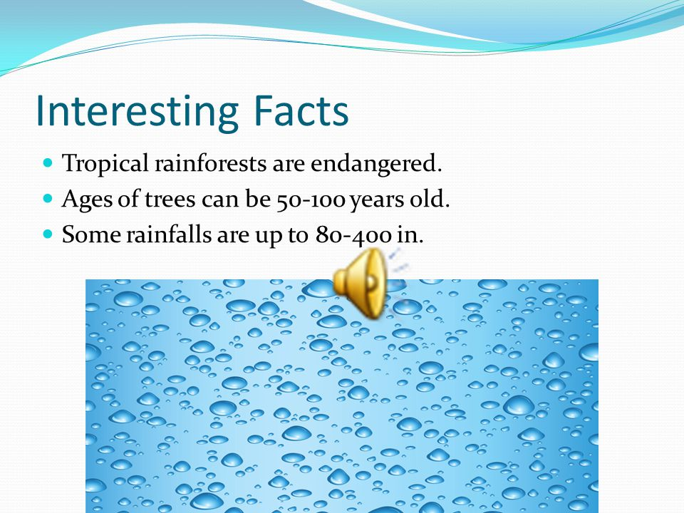 Definition A tropical rainforest is a warm and rainy enviorment in which a lot of life lives.