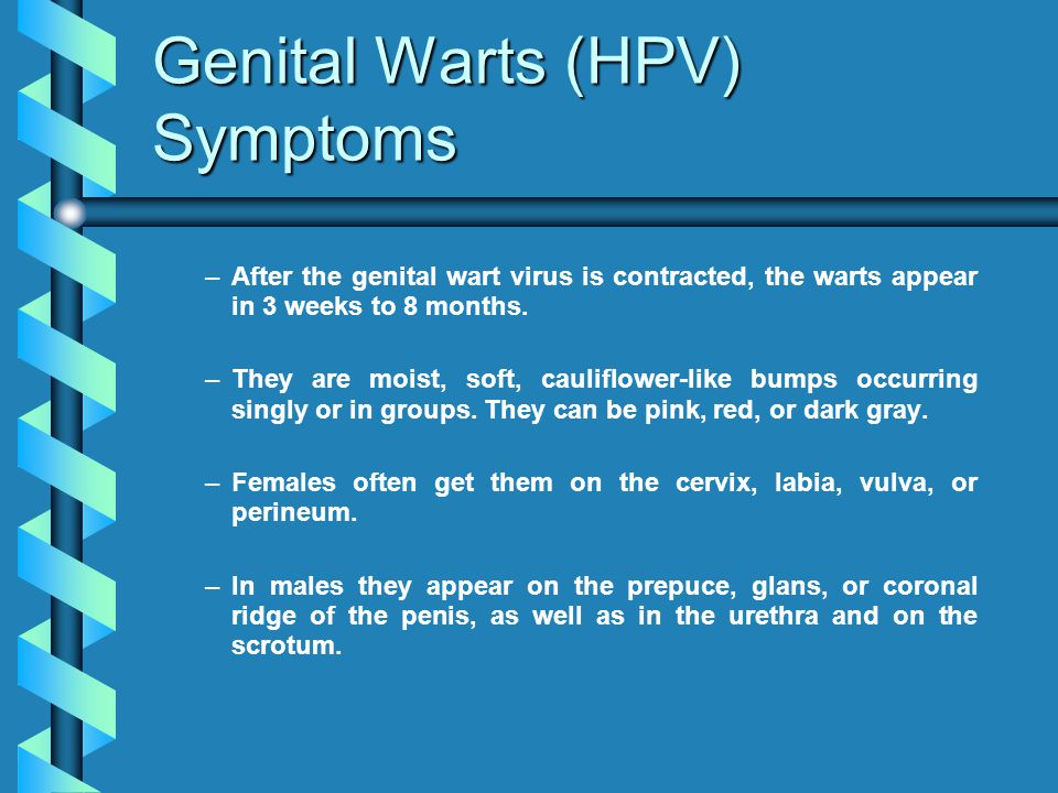 Genital Warts (HPV) Symptoms – –After the genital wart virus is contracted, the warts appear in 3 weeks to 8 months. – –They are moist, soft, cauliflo