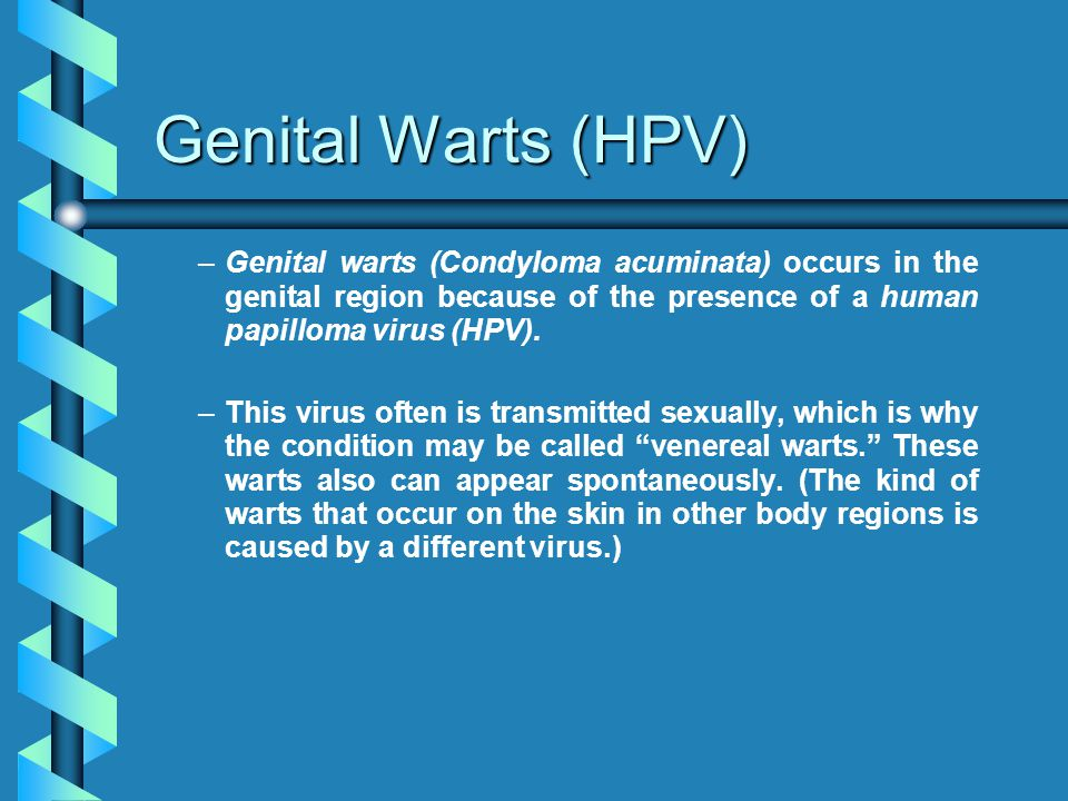Genital Warts (HPV) – –Genital warts (Condyloma acuminata) occurs in the genital region because of the presence of a human papilloma virus (HPV). – –T