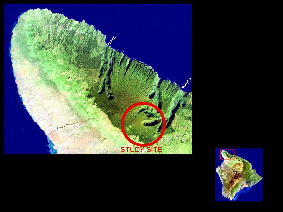 Waipi`o Pololū STUDY SITE