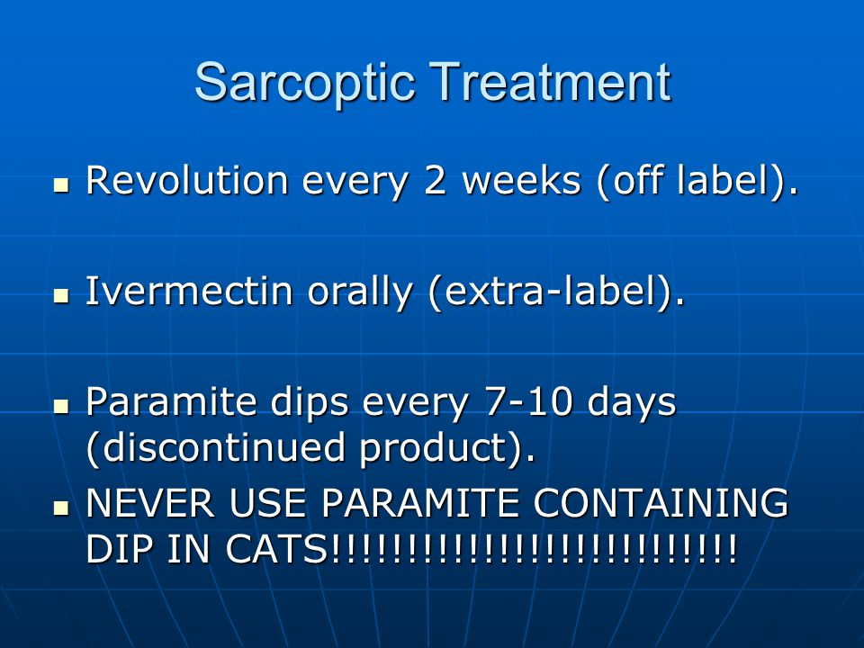 Sarcoptic Treatment Revolution every 2 weeks (off label).