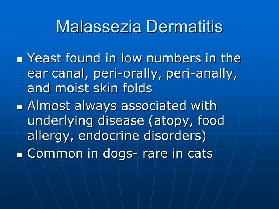 Malassezia Dermatitis Yeast found in low numbers in the ear canal, peri-orally, peri-anally, and moist skin folds Yeast found in low numbers in the ear canal, peri-orally, peri-anally, and moist skin folds Almost always associated with underlying disease (atopy, food allergy, endocrine disorders) Almost always associated with underlying disease (atopy, food allergy, endocrine disorders) Common in dogs- rare in cats Common in dogs- rare in cats