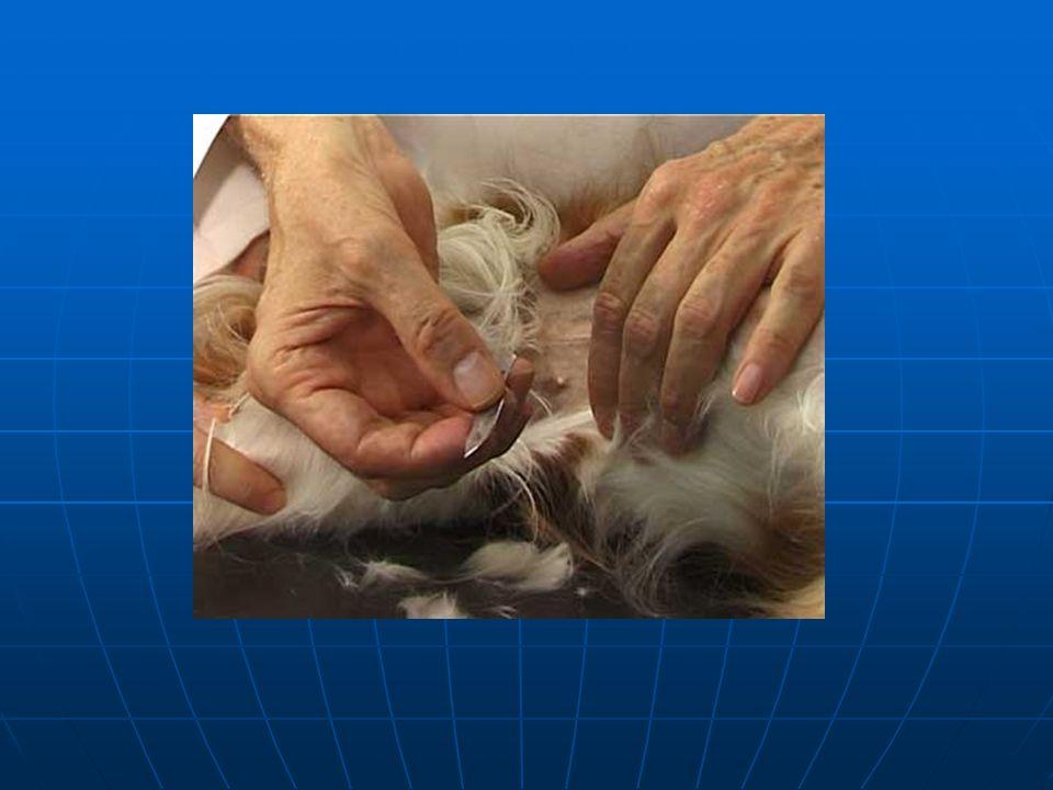 Notoedres cati Treatment Revolution/ Ivermectin Revolution/ Ivermectin Keep isolated from other cats Keep isolated from other cats