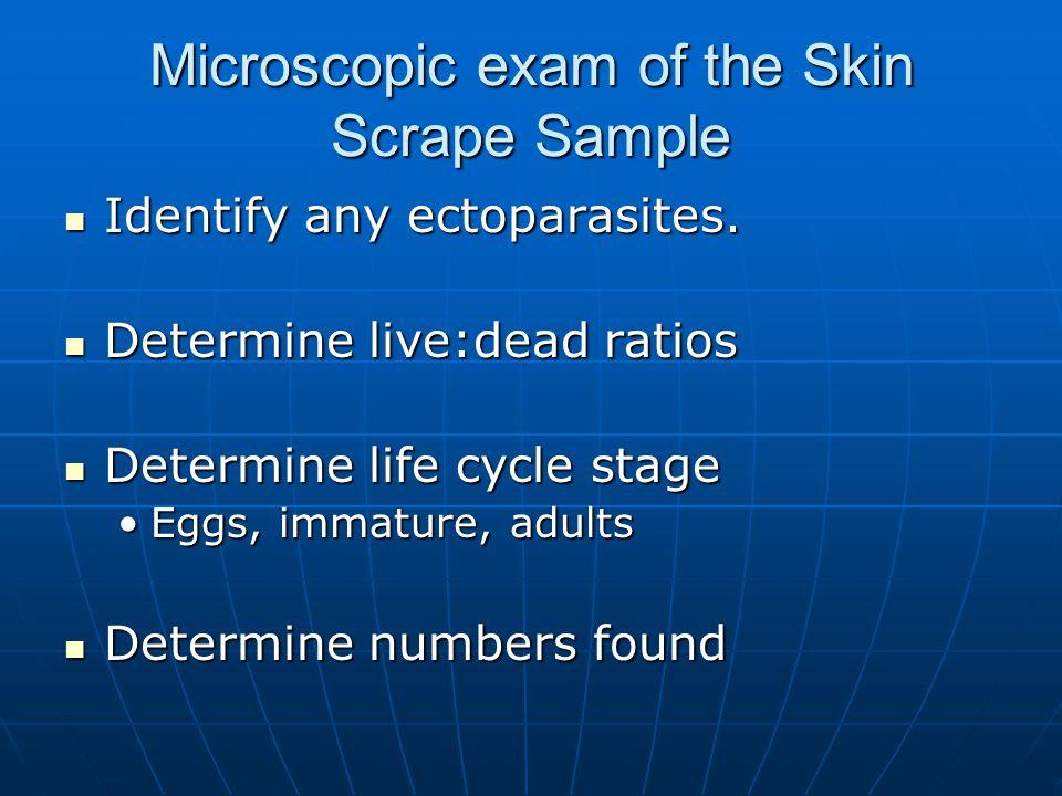 Microscopic exam of the Skin Scrape Sample Identify any ectoparasites.