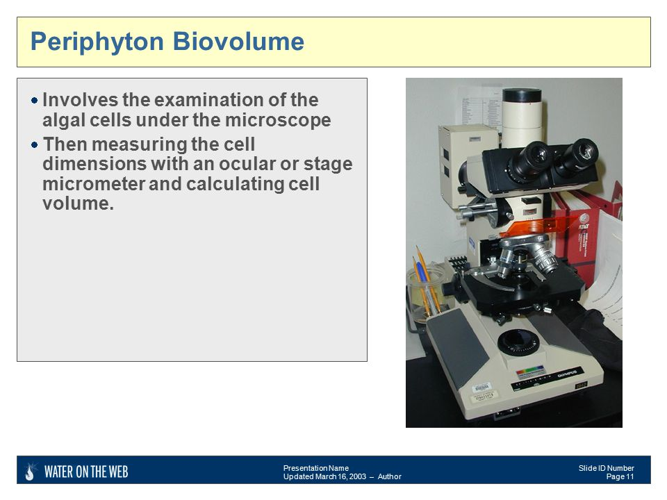 Presentation Name Updated March 16, 2003 – Author Slide ID Number Page 11 Periphyton Biovolume  Involves the examination of the algal cells under the microscope  Then measuring the cell dimensions with an ocular or stage micrometer and calculating cell volume.