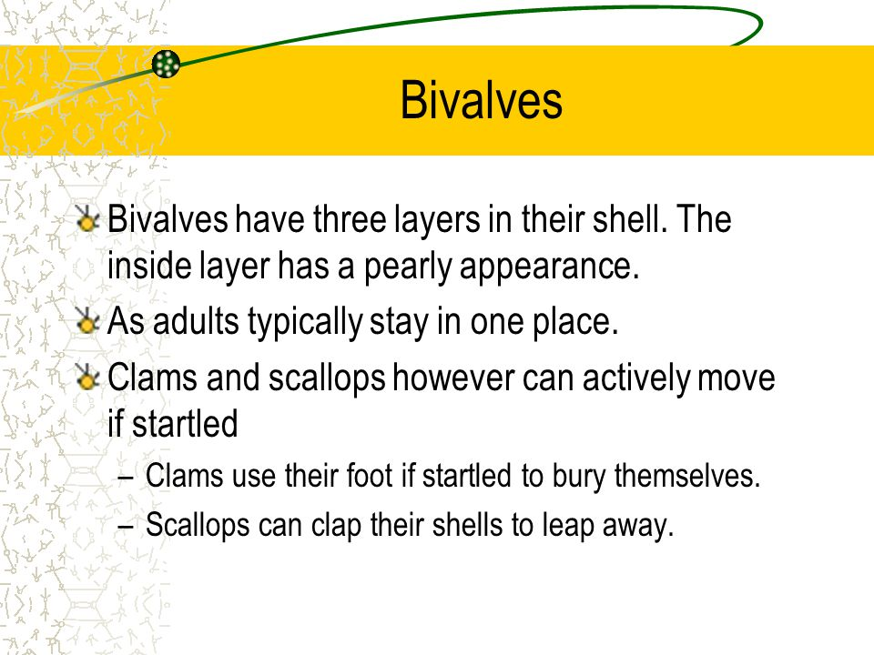 Bivalves Bivalves have three layers in their shell. The inside layer has a pearly appearance. As adults typically stay in one place. Clams and scallop