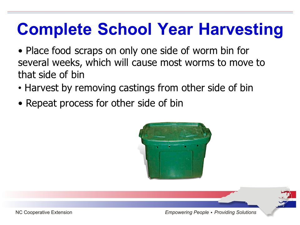 Complete School Year Harvesting Place food scraps on only one side of worm bin for several weeks, which will cause most worms to move to that side of