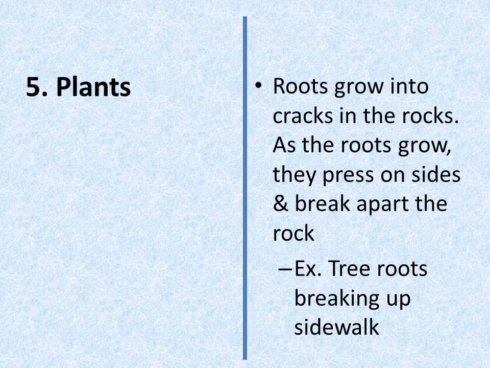 5. Plants Roots grow into cracks in the rocks.
