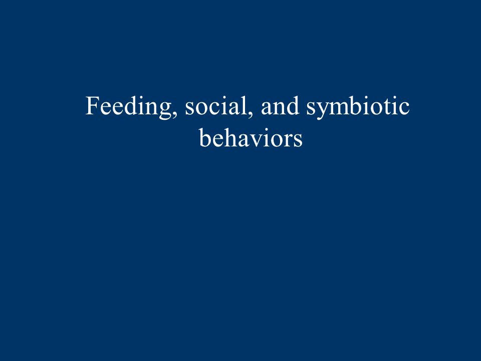 Feeding, social, and symbiotic behaviors