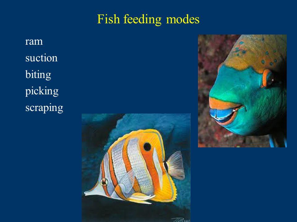 Fish feeding modes ram suction biting picking scraping