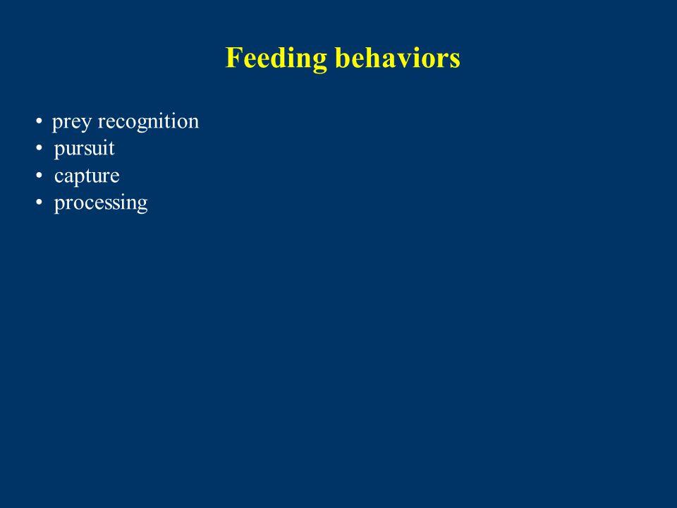 Feeding behaviors prey recognition pursuit capture processing