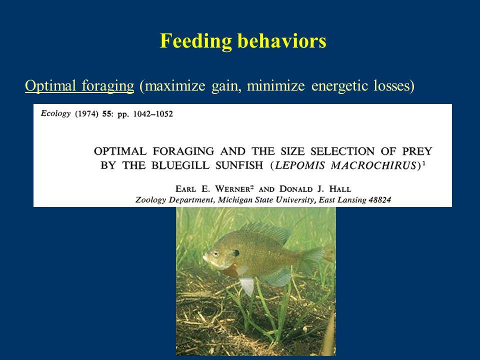 Feeding behaviors Optimal foraging (maximize gain, minimize energetic losses)