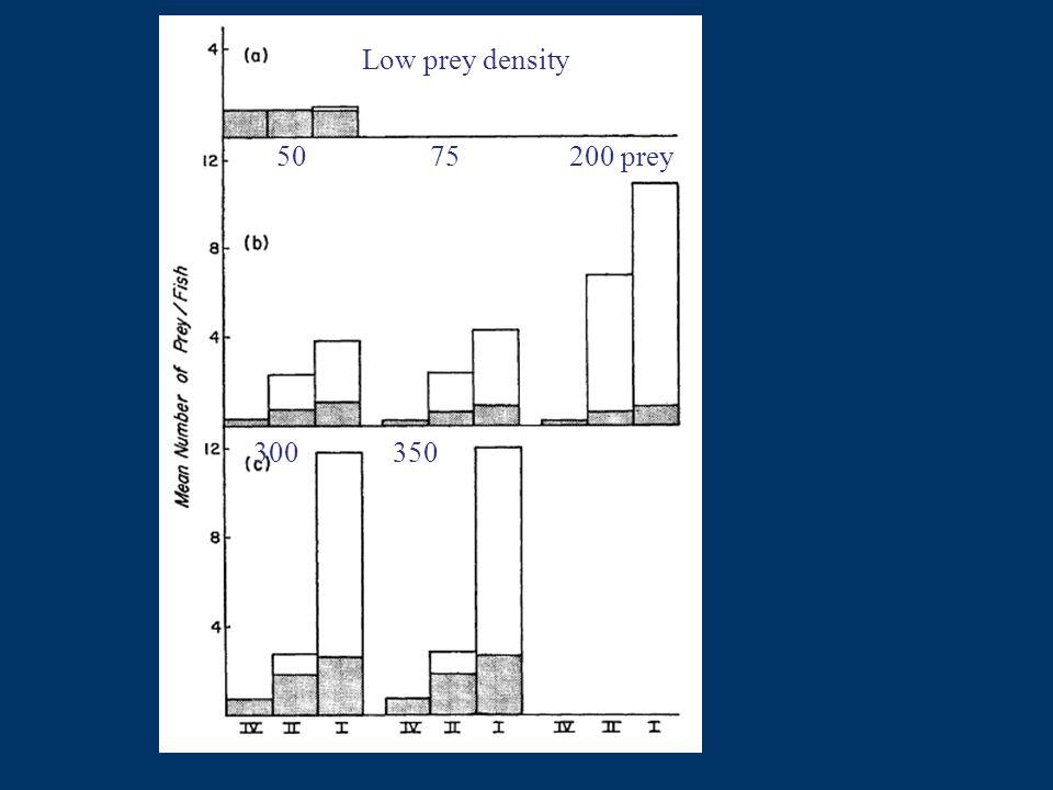 Low prey density 50 75 200 prey 300 350