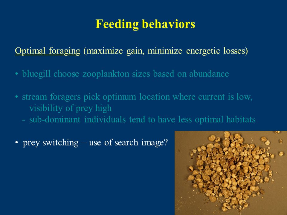 Feeding behaviors Optimal foraging (maximize gain, minimize energetic losses) bluegill choose zooplankton sizes based on abundance stream foragers pick optimum location where current is low, visibility of prey high -sub-dominant individuals tend to have less optimal habitats prey switching – use of search image