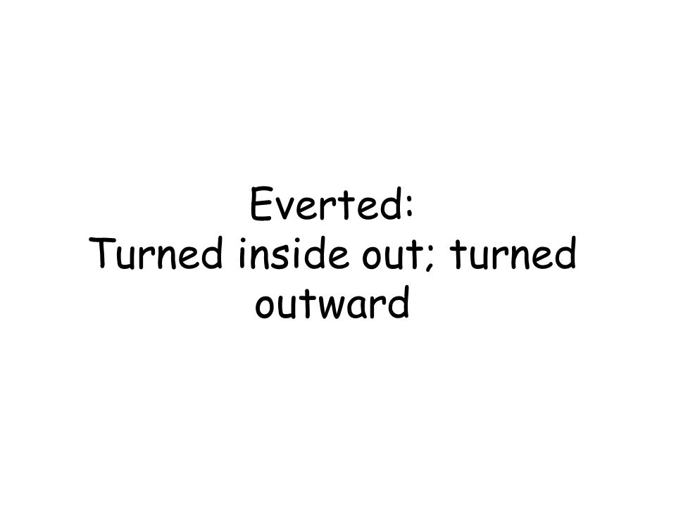 Everted: Turned inside out; turned outward