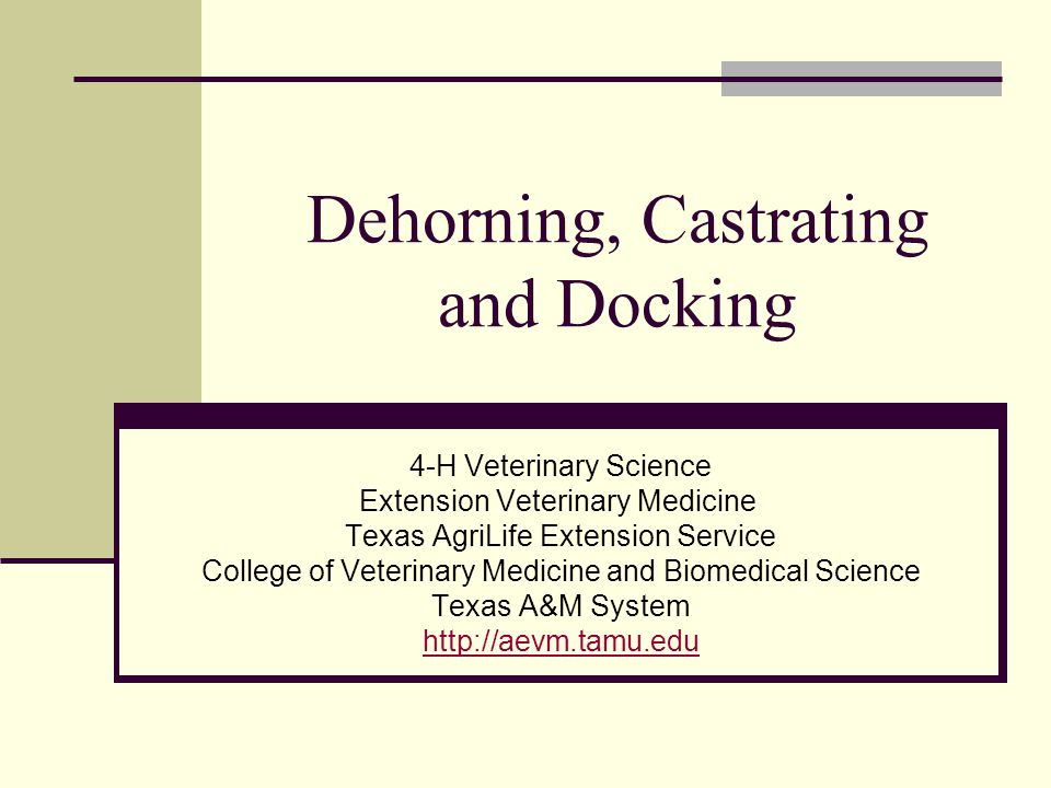 Dehorning, Castrating and Docking 4-H Veterinary Science Extension Veterinary Medicine Texas AgriLife Extension Service College of Veterinary Medicine and Biomedical Science Texas A&M System http://aevm.tamu.edu