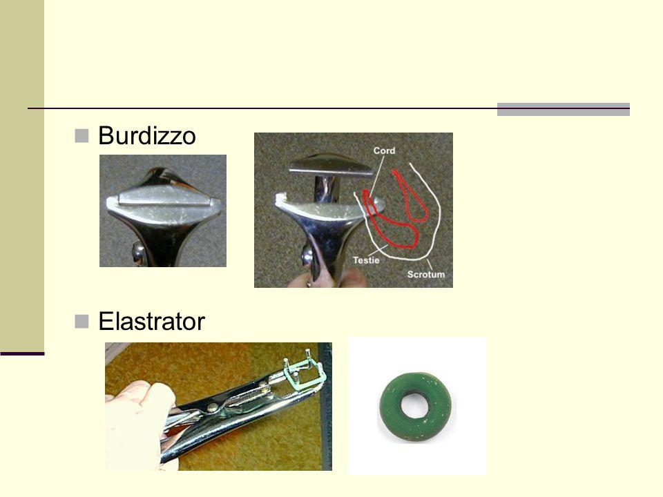Burdizzo Elastrator