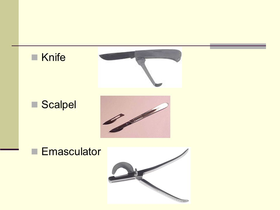 Knife Scalpel Emasculator