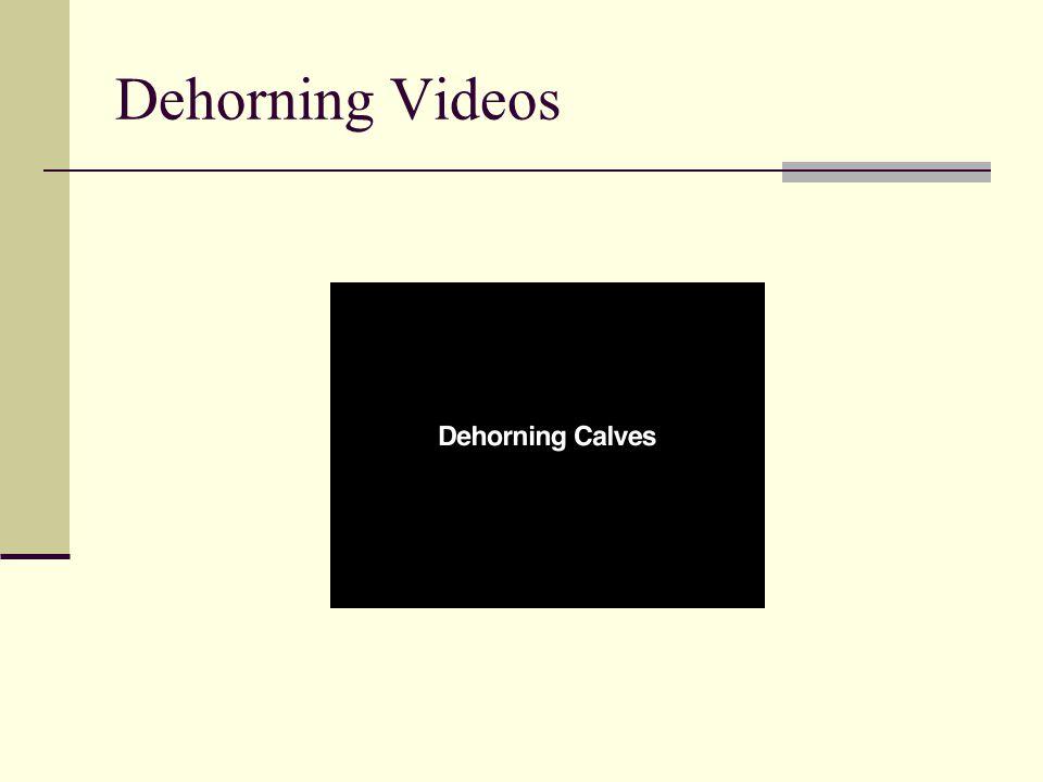 Dehorning Videos