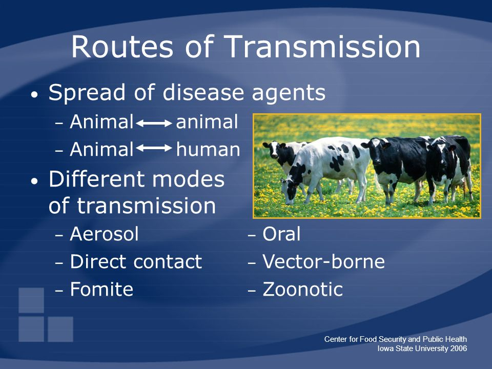 Center for Food Security and Public Health Iowa State University 2006 Routes of Transmission Spread of disease agents – Animal animal – Animal human Different modes of transmission – Oral – Vector-borne – Zoonotic – Aerosol – Direct contact – Fomite