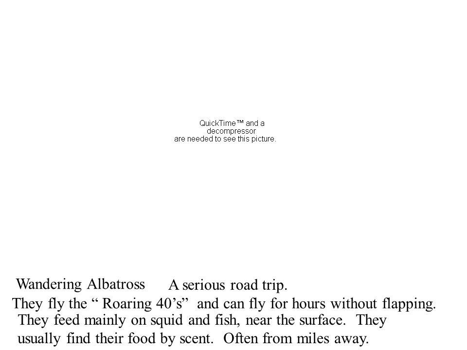 Wandering Albatross A serious road trip.