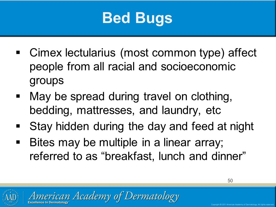 Bed Bugs  Cimex lectularius (most common type) affect people from all racial and socioeconomic groups  May be spread during travel on clothing, bedd