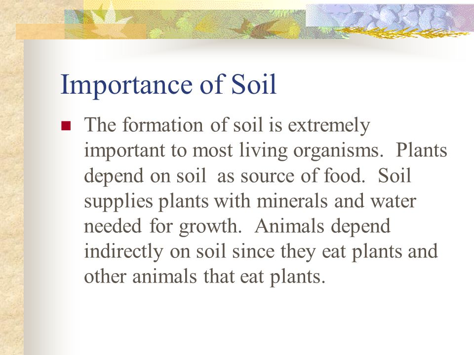Importance of Soil The formation of soil is extremely important to most living organisms.